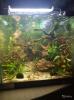 Аквариум акваскейп