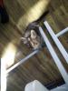 Котята (1 месяц)