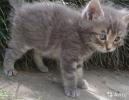 Котята в дар
