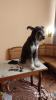 Стрижка собак и кошек с выездом в любой район Сочи