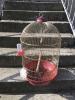 Клетка для средних и мелких птиц