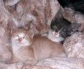 Котятам мальчикам нужен дом