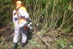 Расчистка участков, покос травы, спил деревьев