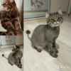 Стрижка кошек и собак с выездом на дом