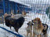 Единый приют для животных Сочи и Туапсе